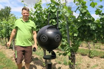 200720_Digitaler Rebstock EXPRESS plant Lösungen für den Weinanbau_1500x1000