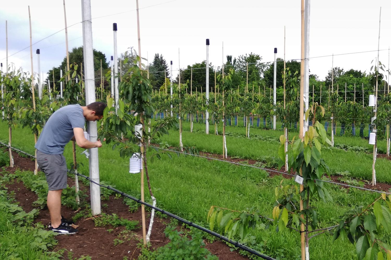 Mikroklima im Obstbau: Forschende vom IMMS haben Sensoren in einer Obstanlage des Lehr- und Versuchszentrums Gartenbau Erfurt ausgebracht