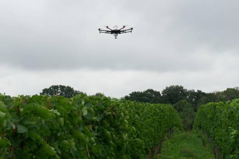 Drohne beim Flug über einen Weinberg