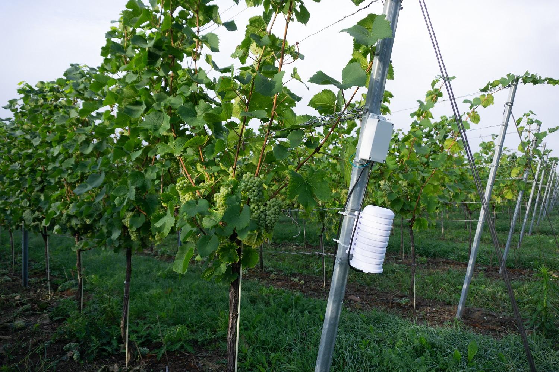 Smart Farming in Obst- und Weinbau: Schwerpunkte in EXPRESS