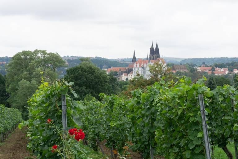 Blick auf die Meißener Albrechtsburg in Meißen