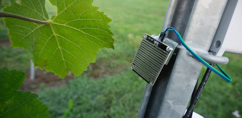 Schwerpunkt Abiotik: Sensor zur Messung der Blattfeuchte im Weinbau