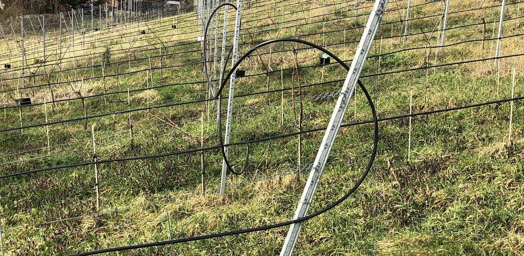 Schwerpunkt Wasserstress: Bewässerungsanlage im Weinbau