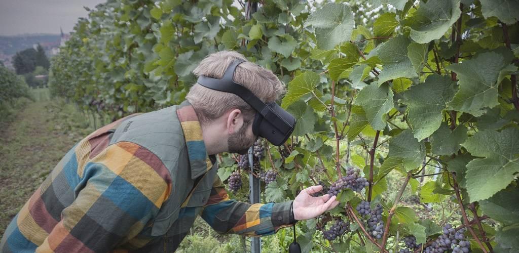 Person mit VR-Brille im Weinberg